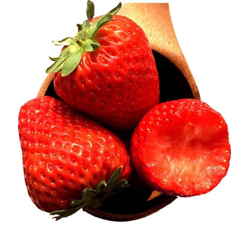 京郊顺义红颜草莓
